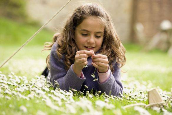 Child making a daisy chain on a visit to Trerice, Cornwall