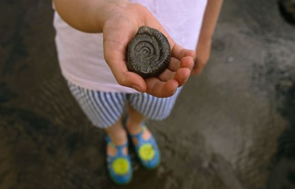 A child holding a fossil, on a beach in Yorkshire