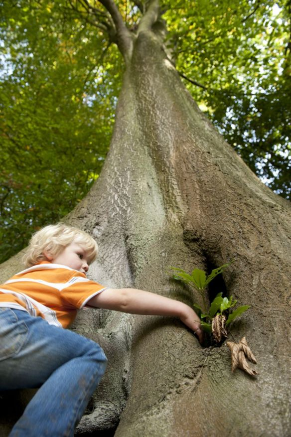 Child climbing a tree in the garden at Quarry Bank Mill, Wilmslow, Cheshire.