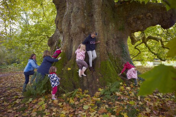 Tree climbing at Mottisfont - ©National Trust Images Arnhel de Serra